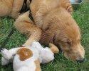 Tired, Wet Puppy