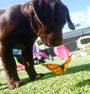 A puppy and a butterfly